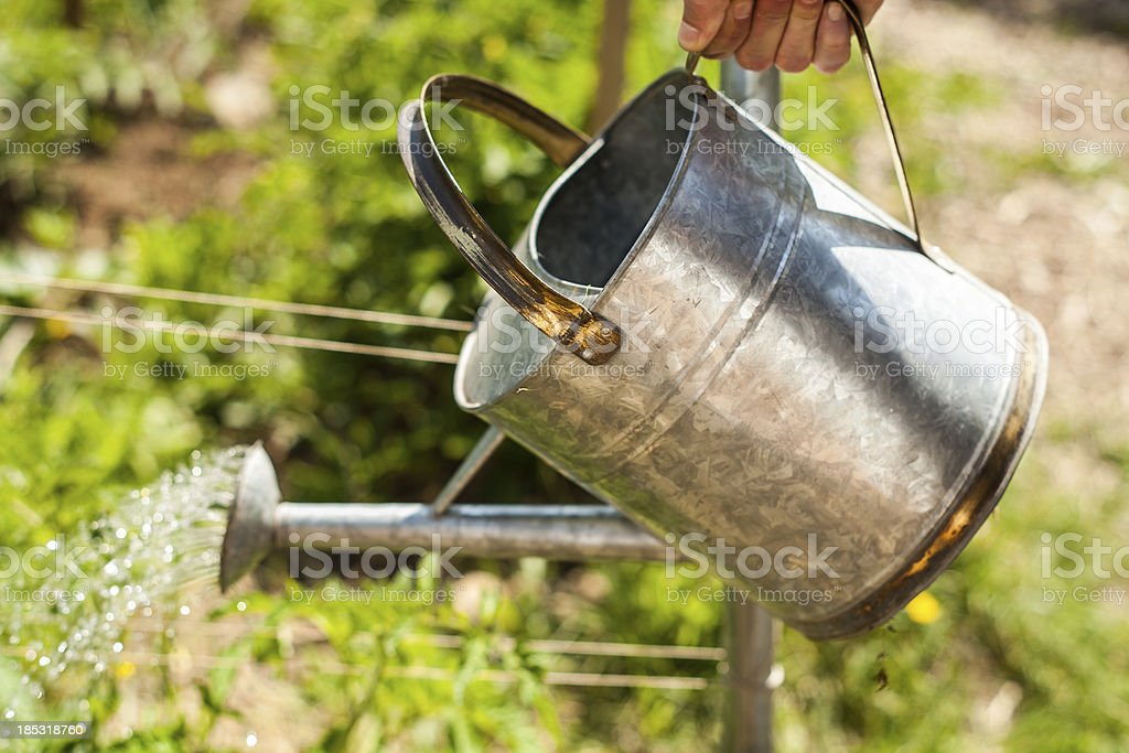 Sturdy Tin Watering Can Pouring Water over Garden stock photo