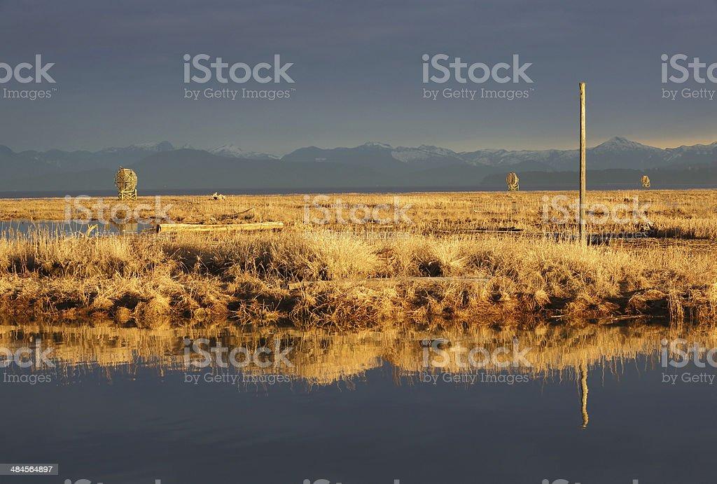 Sturgeon Bank Marshes, Richmond, BC, Richmond, BC stock photo