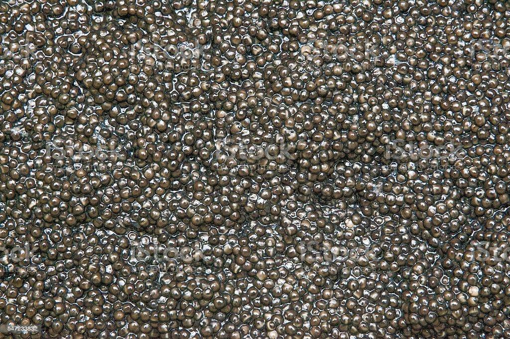 Sturgeon caviar. stock photo