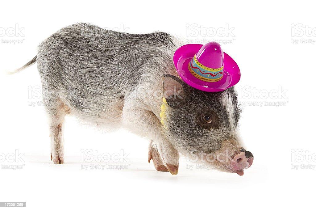 Stylish Mini Pig royalty-free stock photo