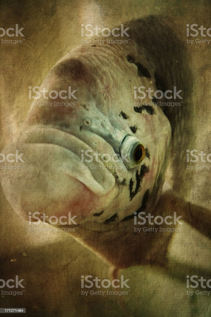Stylized grunge picture of giant fish stock photo