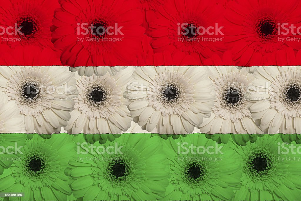 stylized  national flag of hungary with gerbera flowers royalty-free stock photo
