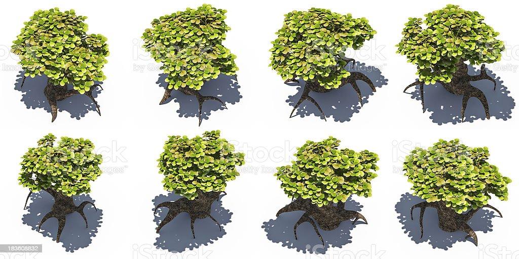 Birds Eye View Tree - Home Ideas