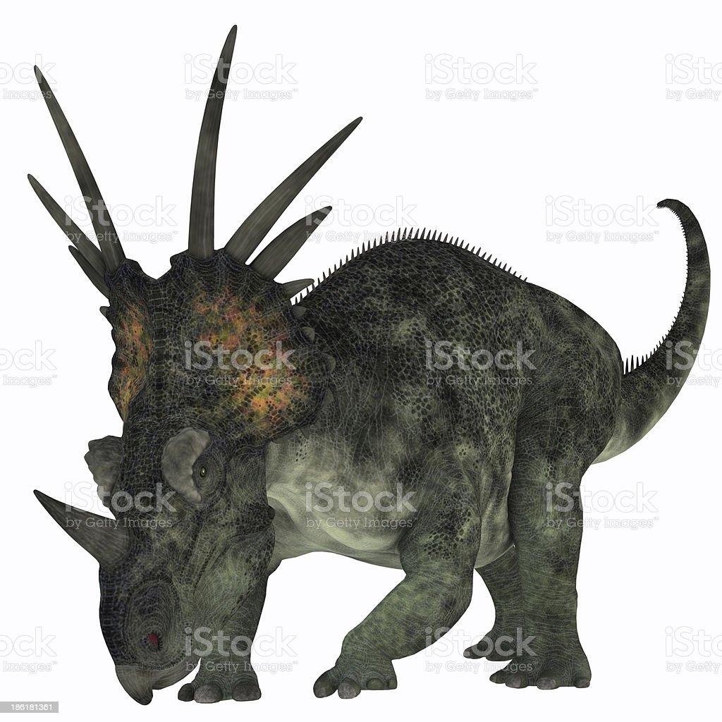 Styracosaurus on White royalty-free stock photo