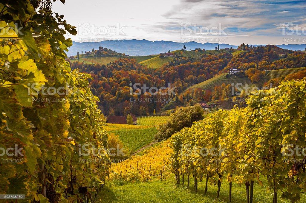 Styrian Vineyard stock photo