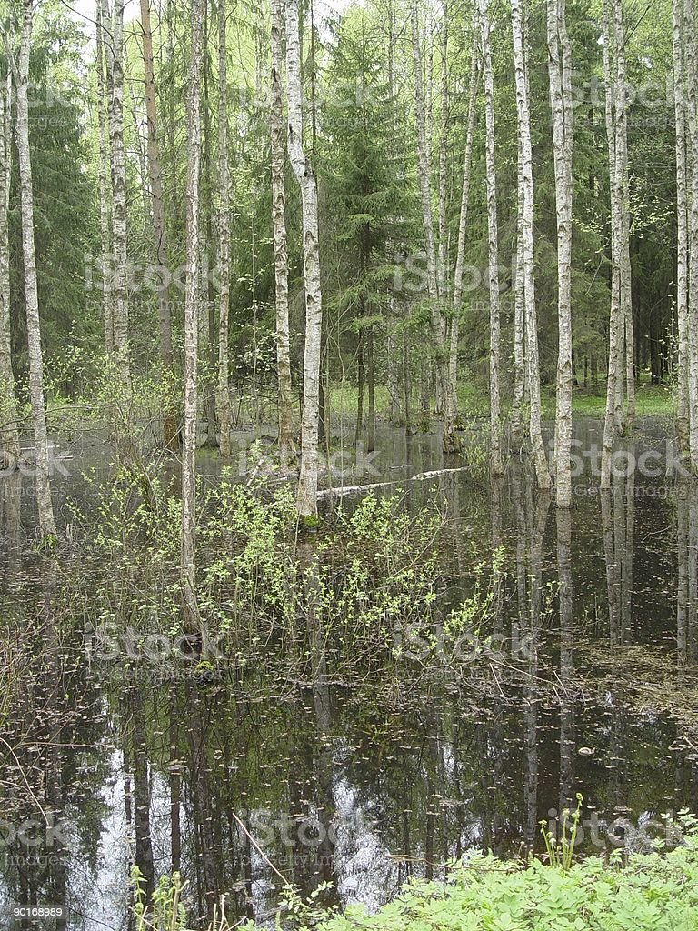 submerged trees royalty-free stock photo