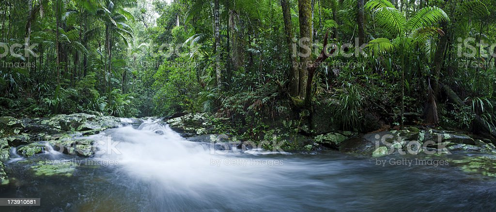 Sub-Tropical Rainforest royalty-free stock photo
