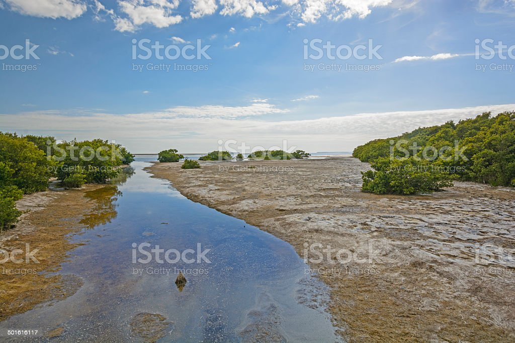 Sub-Tropical Stream entering into an ocean bay at Low Tide stock photo