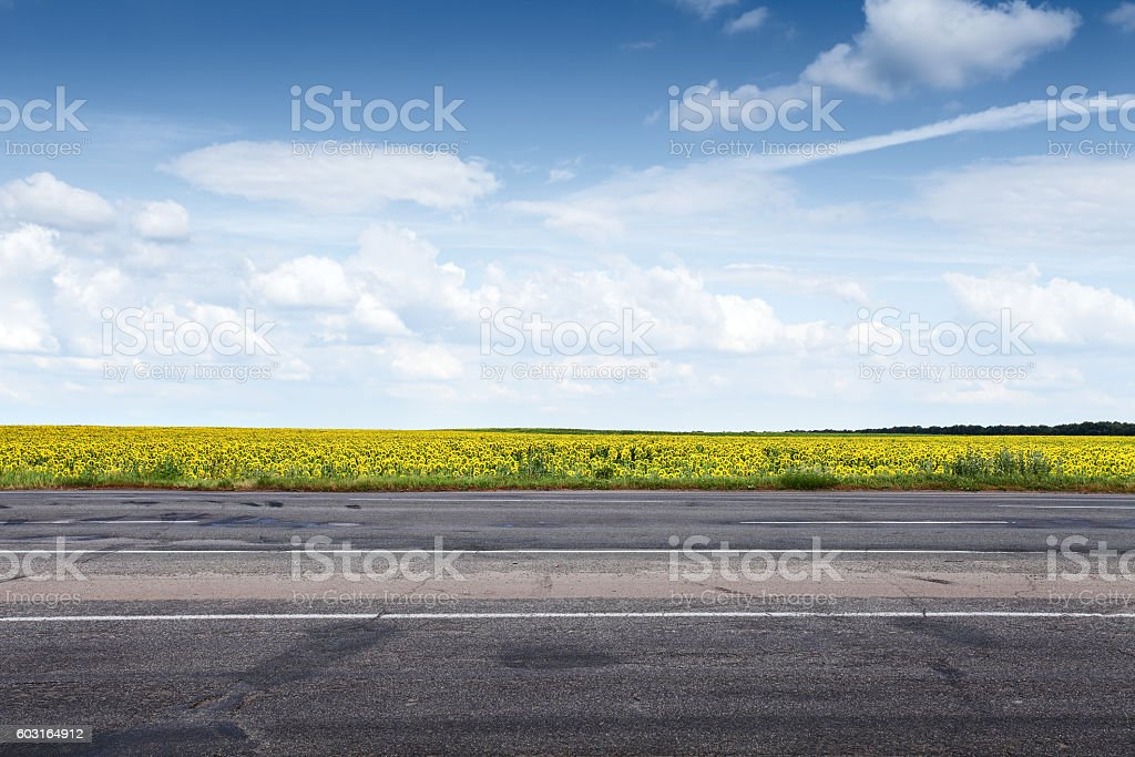 Suburb asphalt road and sun flowers stock photo