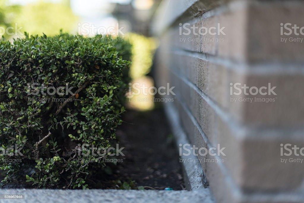 Suburban building landscaping shrub hedge garden stock photo