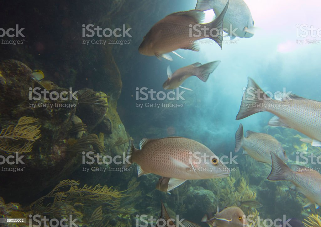 Sucba Diving stock photo