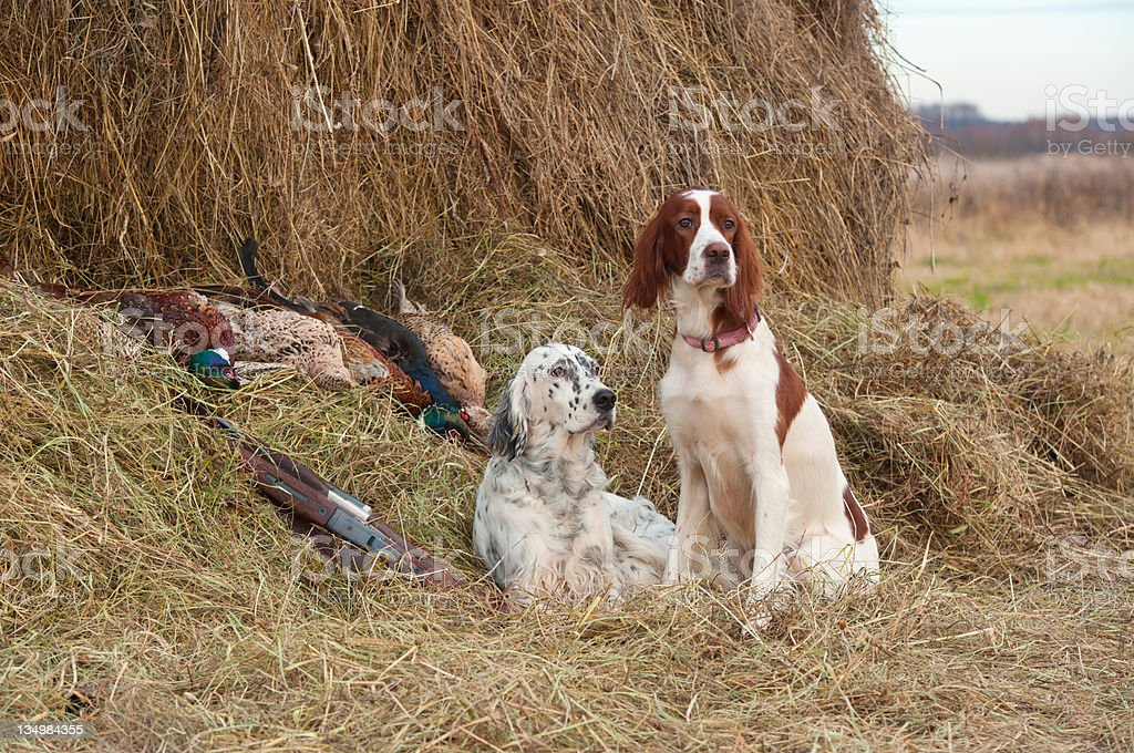 Successful bird shoot royalty-free stock photo