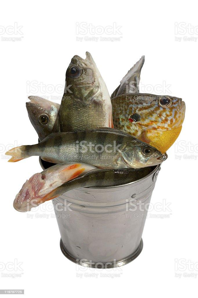 Successful fishing! royalty-free stock photo