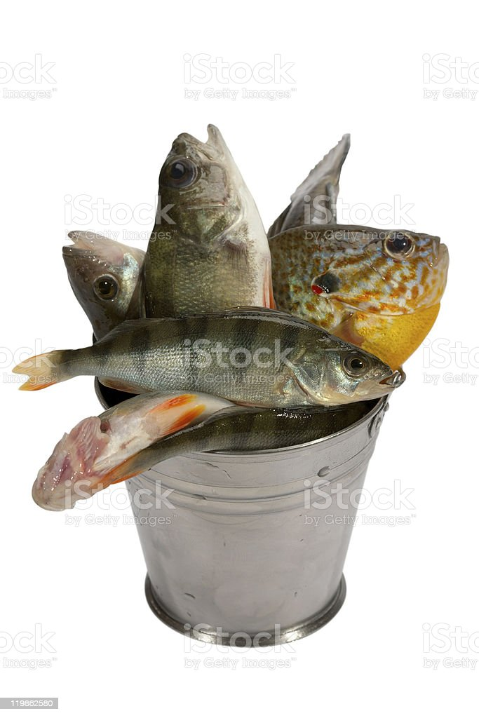 Successful fishing! royalty-free stock photo