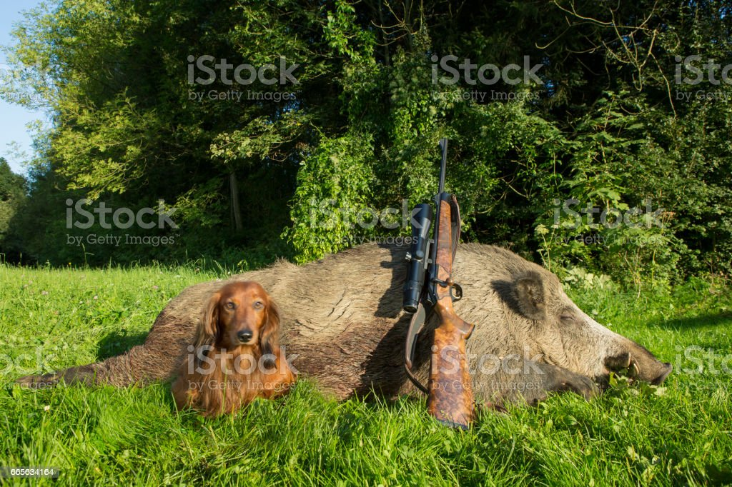 Successful hunting stock photo