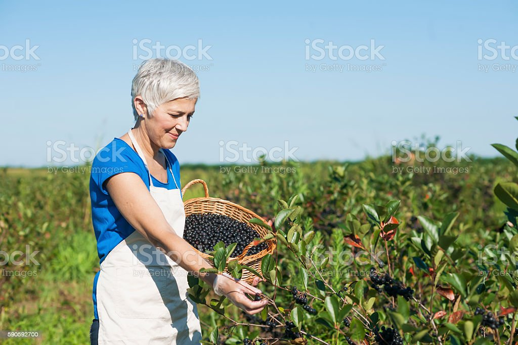 Successful senior woman with hat at field stock photo