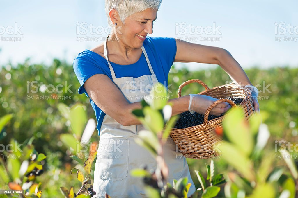 Successfull senior woman with hat at field stock photo