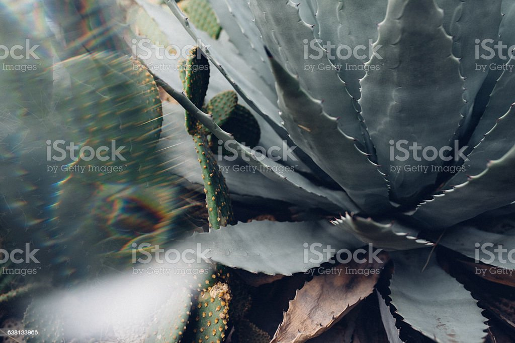 Succulent abstract stock photo