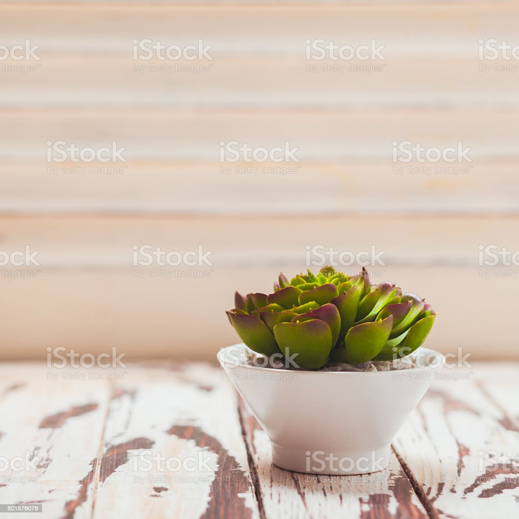 Succulent as a home decor stock photo