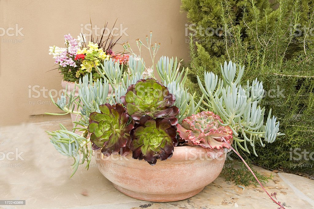 Succulent Color Bowl royalty-free stock photo