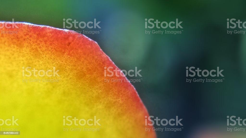 Succulent Edge stock photo