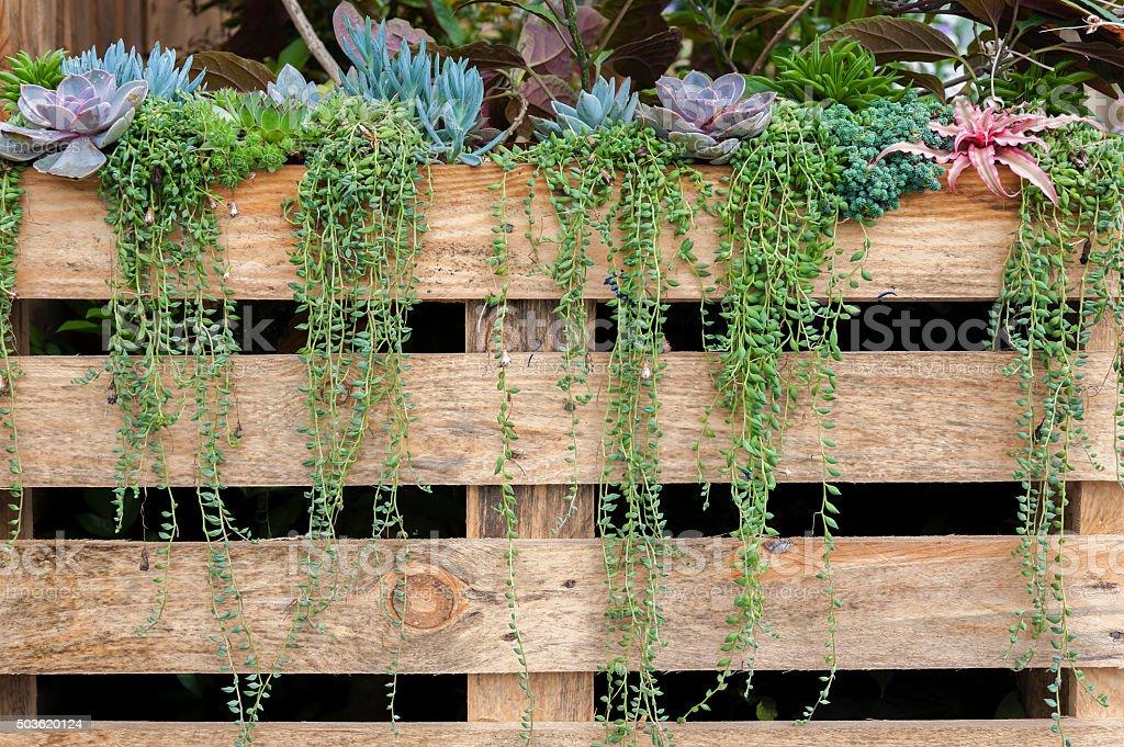 succulent flower stock photo