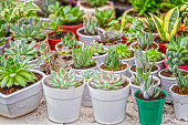 Succulent garden with potted cactus