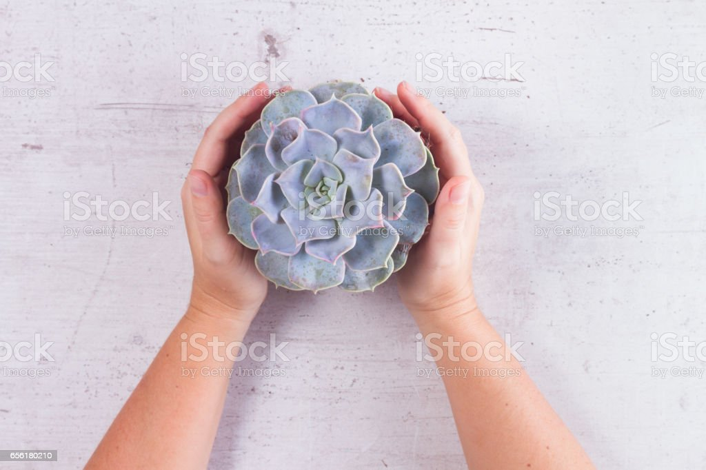 Succulent growing plants stock photo