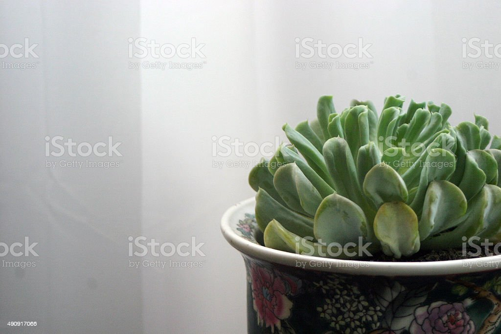 Succulent in a floral pot stock photo