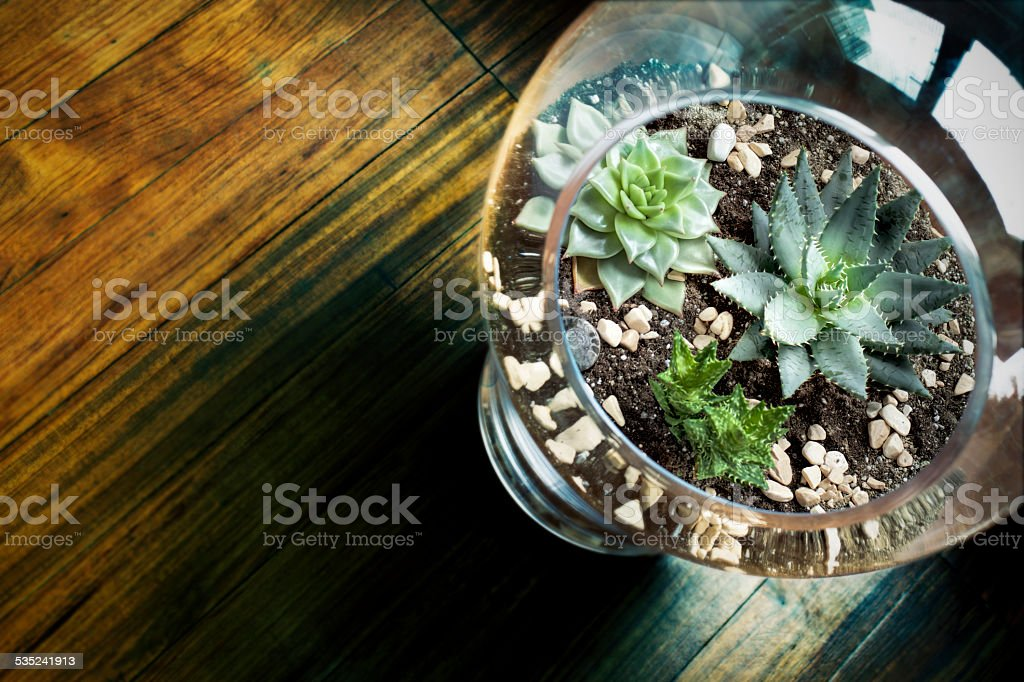 Succulent in Glass Vase stock photo