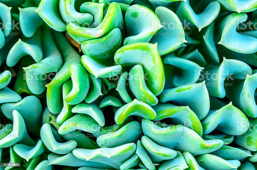 Succulent plant - Cactus stock photo