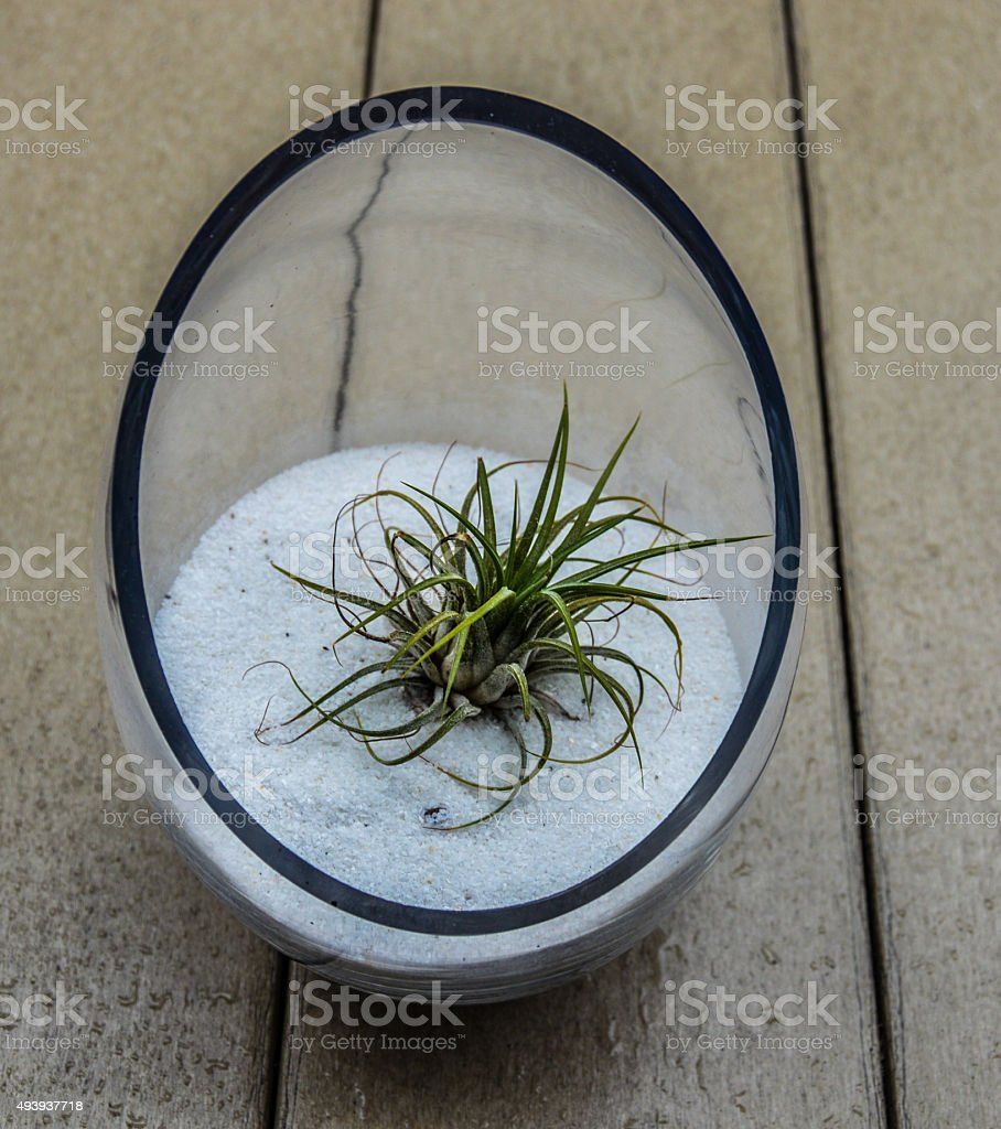 Succulent plant in glass pot stock photo