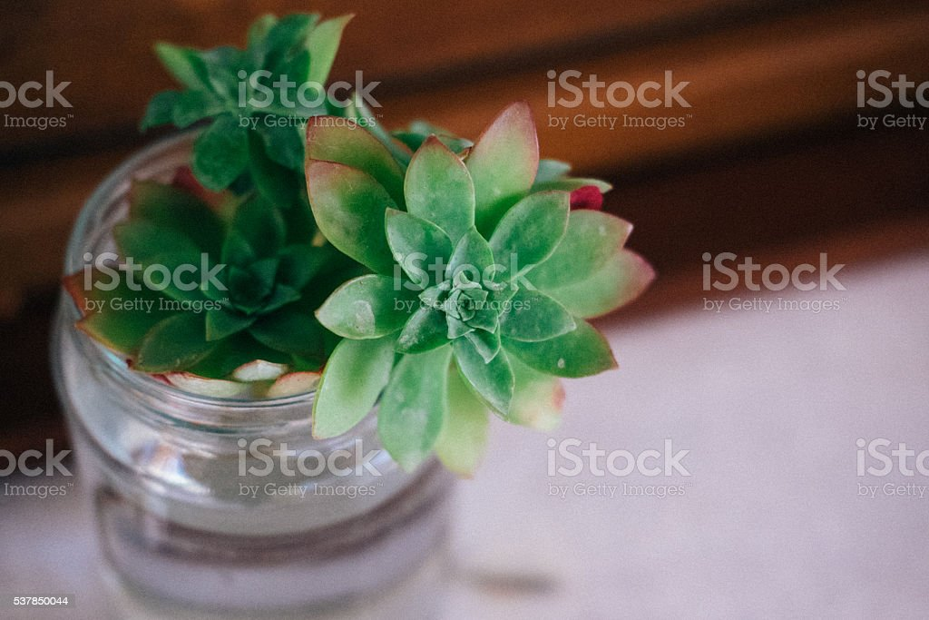 Succulent plant in water stock photo