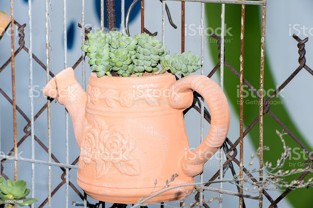 succulent plants in clay pot stock photo