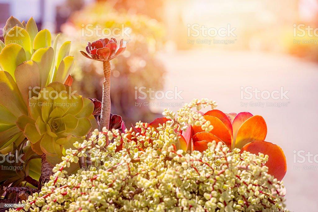 Succulent plants in daytime sun stock photo