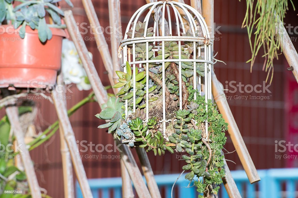 succulent plants in the cage stock photo