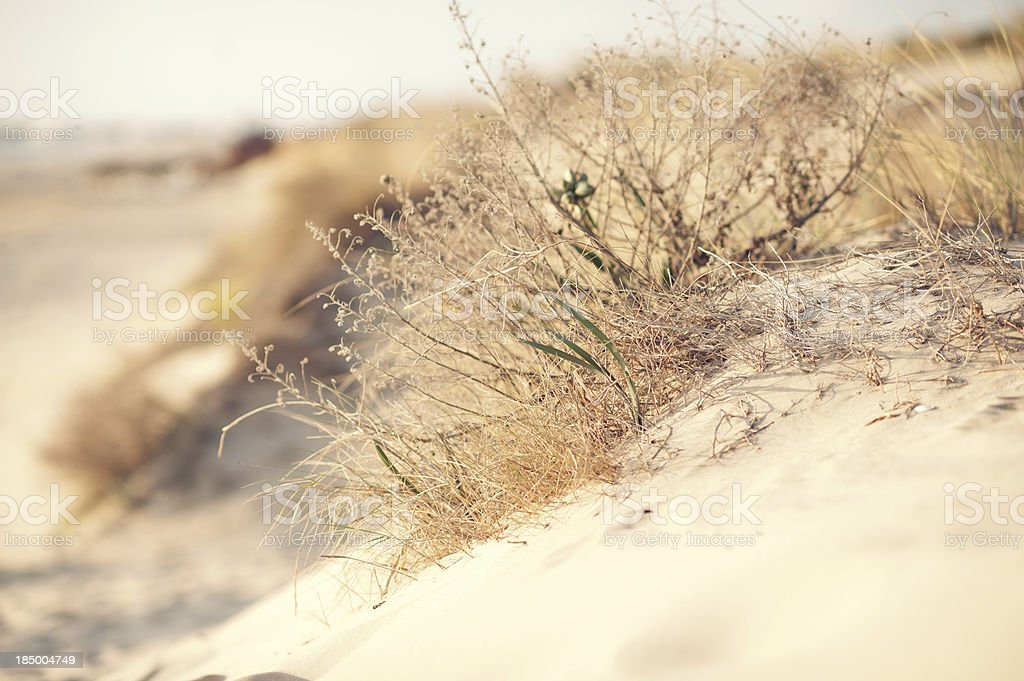 Succulent plants in the sand royalty-free stock photo