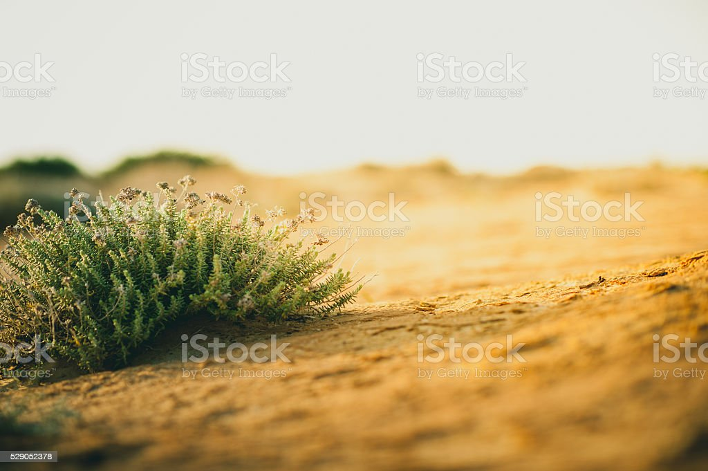 Succulent plants in the sand stock photo