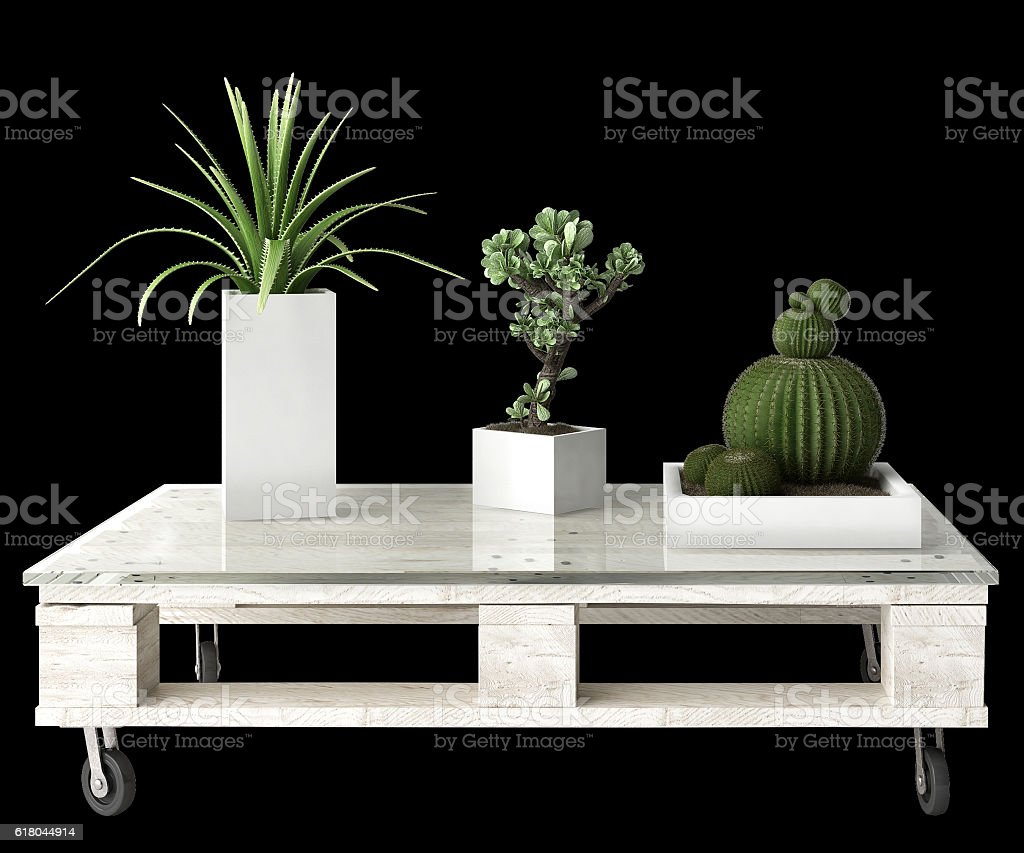 Succulent plants on pallet table isolated on black background stock photo
