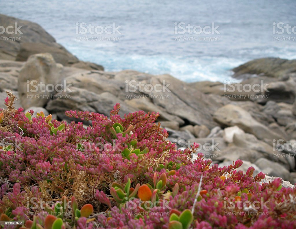 Succulent plants on the Rocky bay stock photo