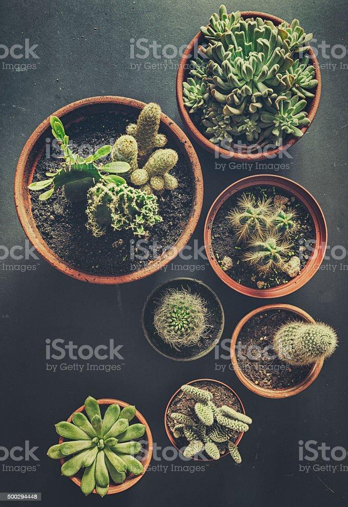 Succulent plants stock photo