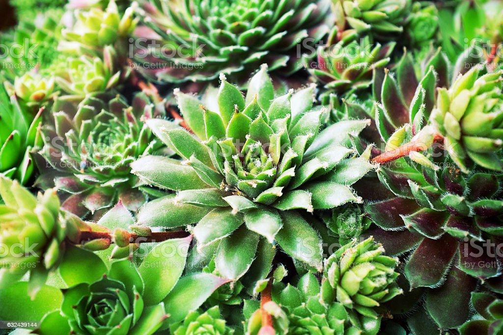 Succulent plants set background stock photo