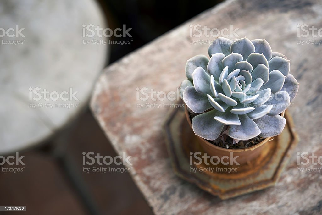 succulent pot on wooden table no2 stock photo