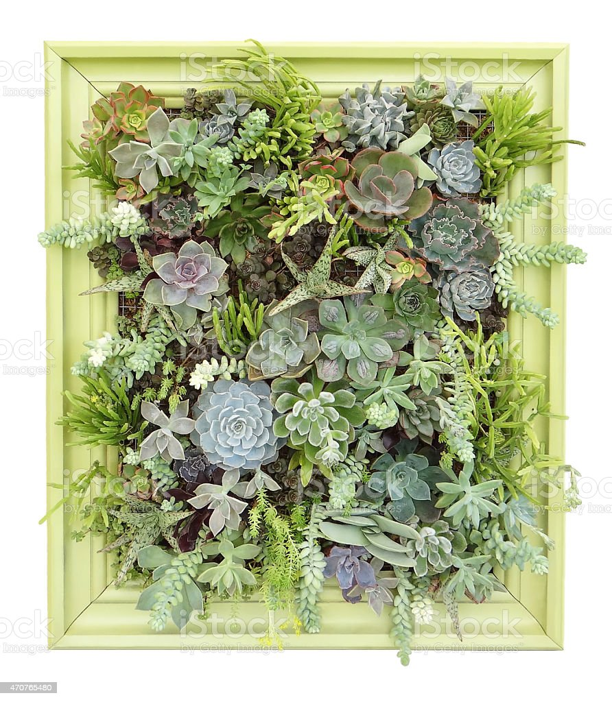 succulent wall hanging stock photo