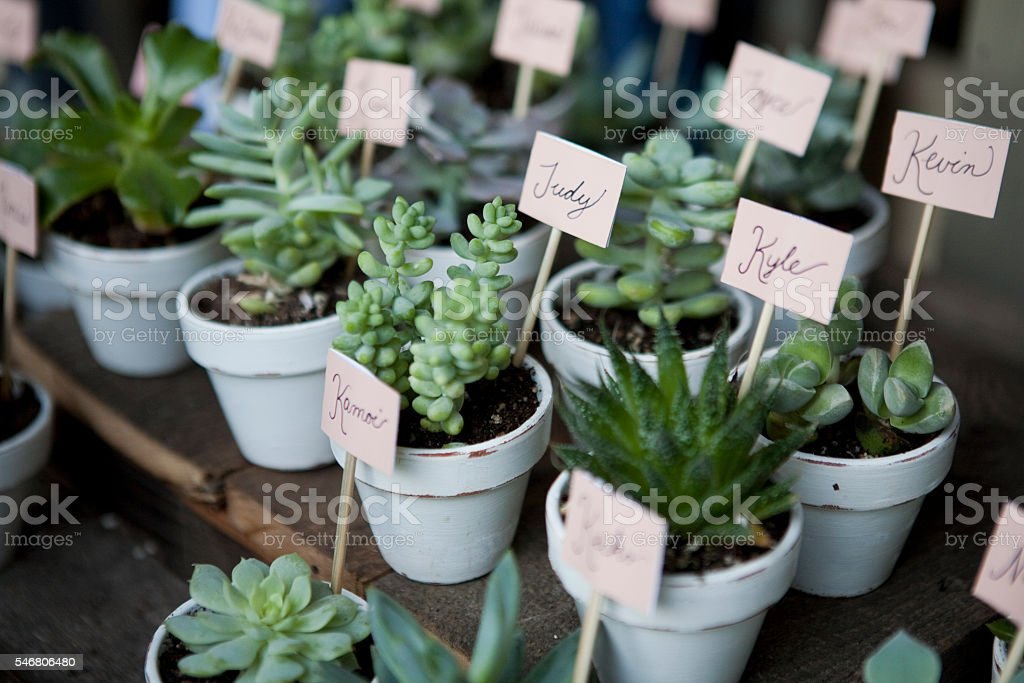 Succulent Wedding Favors stock photo