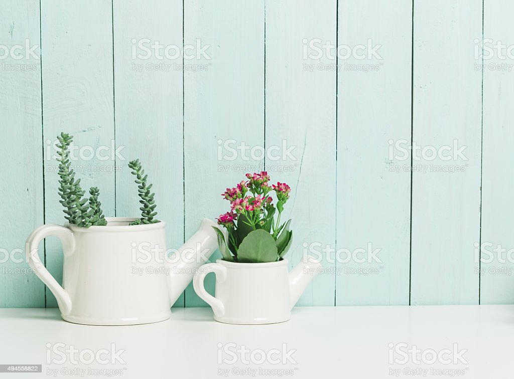 succulents collection stock photo