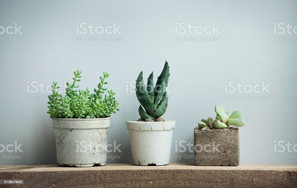 succulents in diy concrete pots in scandinavian  home stock photo