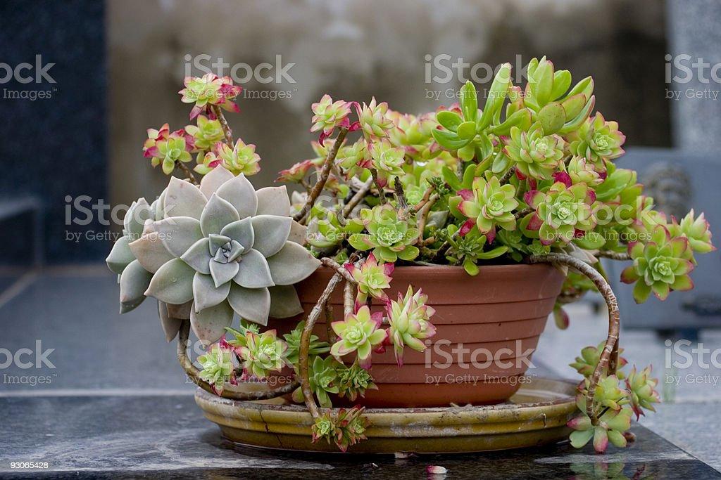 Succulents stock photo