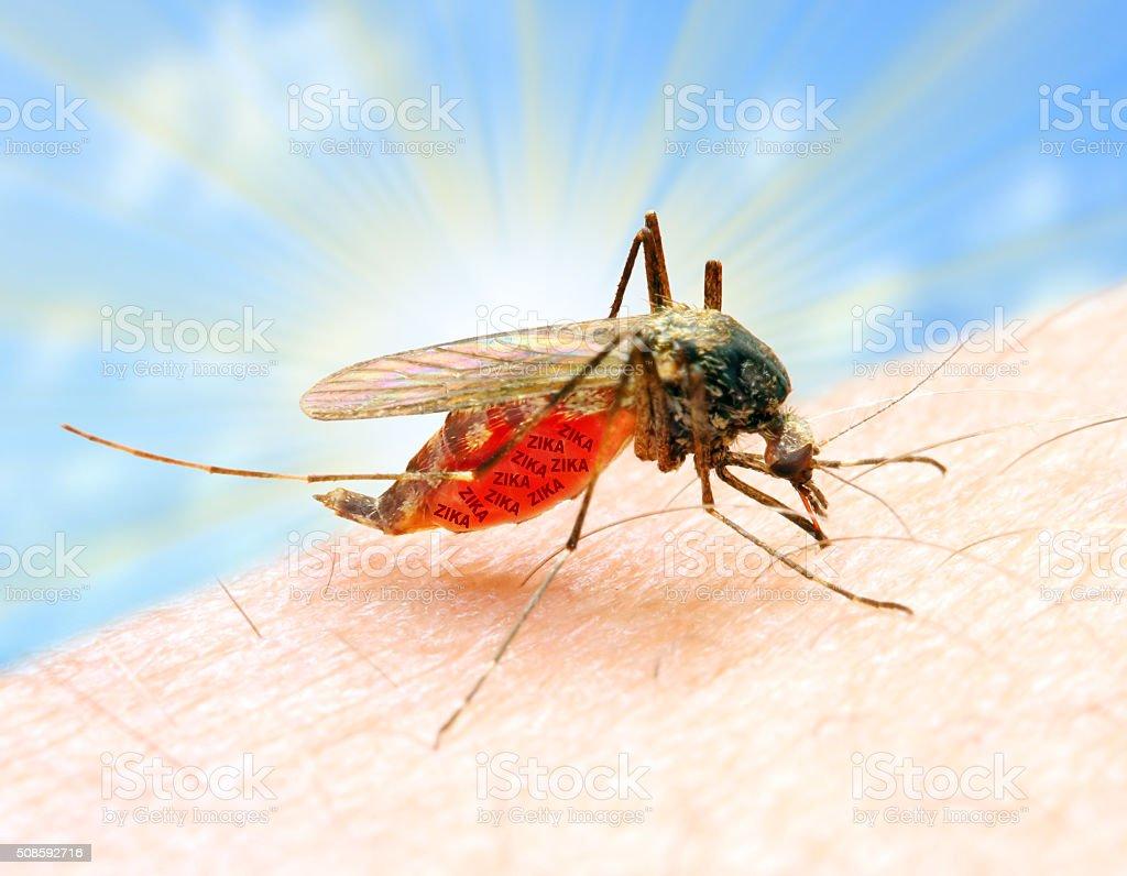 Sucking mosquito. stock photo