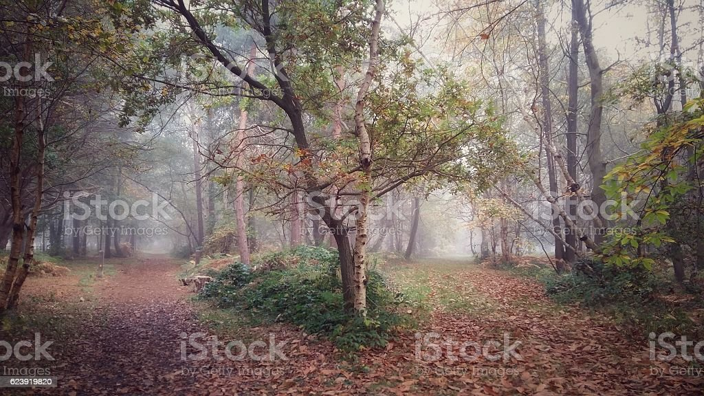 Suffolk autumn, misty woodland on the Suffolk Coast Path stock photo